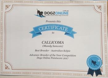 Dogzonline Best Breeder Certificate
