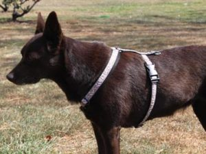 patterned harness