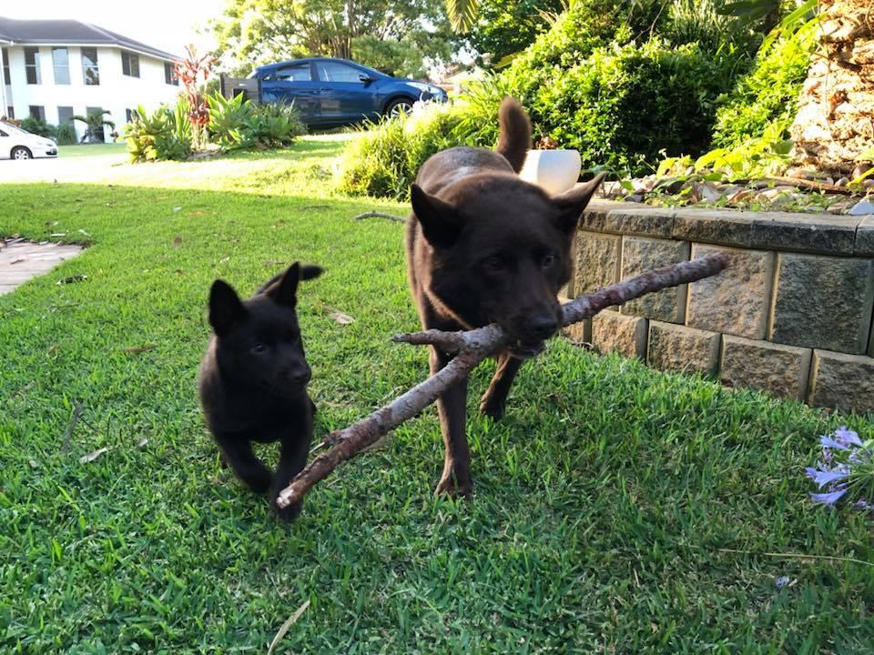 Dash and Kobi