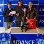 Spice winning Agility Nationals