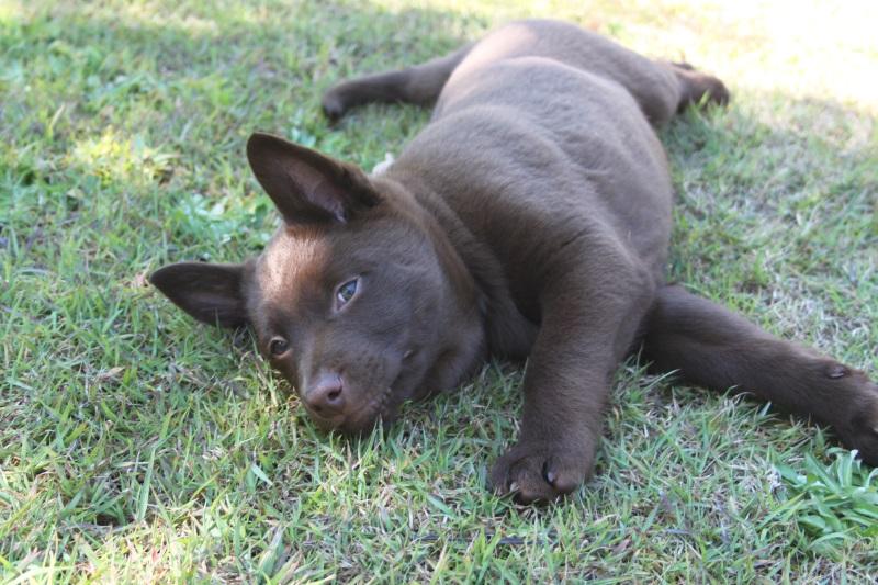 Callicoma Bearpaw Shale (Archie)